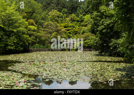 Kyoyochi Pond, Ryōan-ji, the Temple of the Dragon at Peace, Kyoto, Japan. - Stock Photo