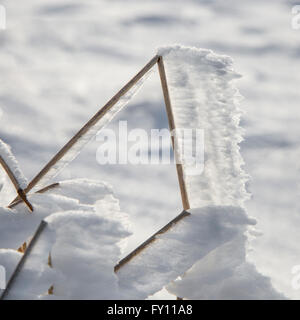 White hoar frost / hoarfrost forming on broken grass stem pointing in same direction due to the wind in winter - Stock Photo