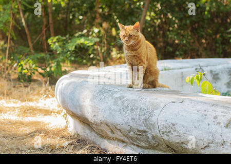 Red cat on the street. - Stock Photo