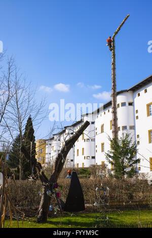 Tree felling in housing area, Berlin, Germany - Stock Photo