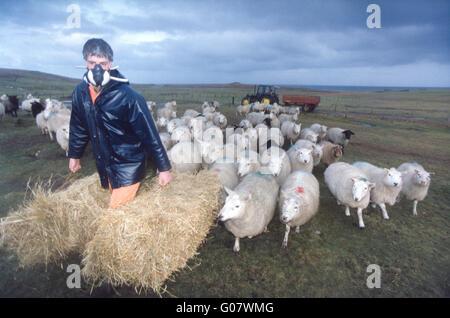 Braer Disaster Shetland 1993 farmer wears mask for protection from oil. - Stock Photo