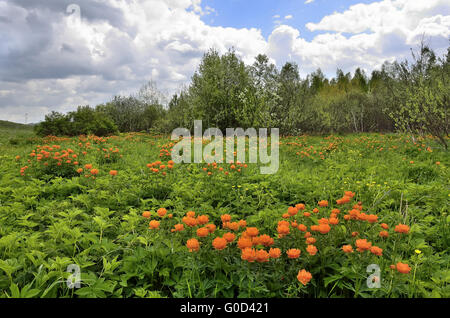 Wild flowers on the spring meadow - Stock Photo
