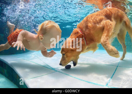 Funny little child play with fun and train golden labrador retriever puppy in swimming pool, jump and dive deep - Stock Photo
