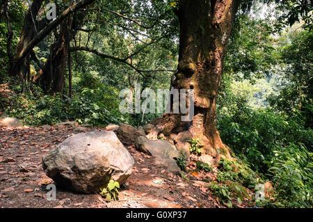Forest in the mountains of Juayua, Ruta de las Flores itinerary,  El Salvador - Stock Photo