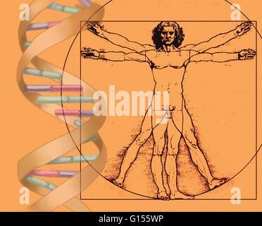 Image combining Leonardo da Vinci's iconic Vitruvian Man drawing with an illustration of DNA. - Stock Photo