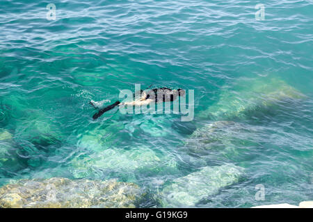 Diver searching under Mediterranean sea near Riva Levante in Italy, view from above the water - Stock Photo