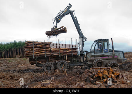 A forwarder collects logs of douglas fir from a plantation on Forestry Commission Wales land that is being clear - Stock Photo