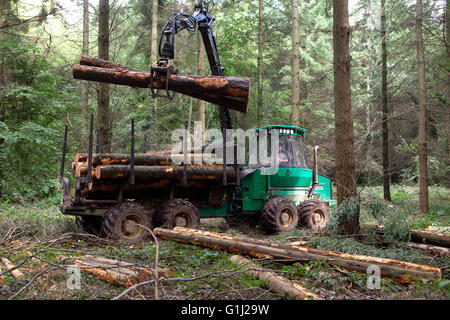 Forest of Dean, Gloucestershire. A forwarder collects cut logs of Forestry Commission douglas fir from an area being - Stock Photo