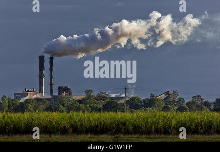 Sugar cane growing in a field in front of a sugar mill - Stock Photo