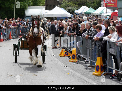 Wickham, Hampshire, UK. 20th May, 2016. Revellers and animal lovers have turned out in numbers for this year's Wickham - Stock Photo