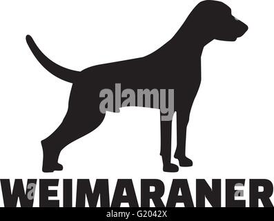 Weimaraner with breed name - Stock Photo
