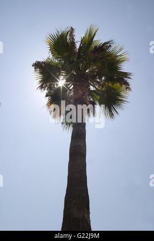 Palma de Maoirca, photoarkive - Stock Photo