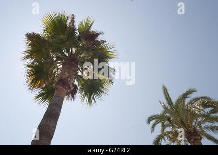 Palm trees, Palma de Maoirca - Stock Photo