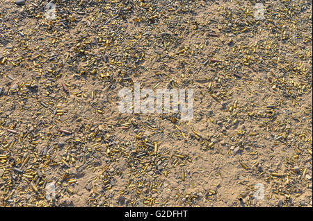 a shot of a ground riddled with spent shell casings from the discharging of guns at a gun range - Stock Photo