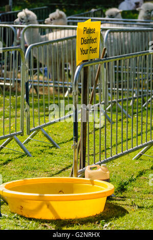 Foot disinfection station at a llama and rare breeds farm during an outbreak of Foot and Mouth Disease - Stock Photo