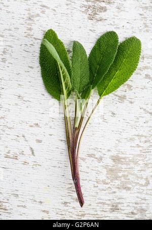 Single twig of fresh Sage on wooden board - Stock Photo