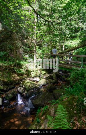gorge Windberg-Schlucht, hiker, Germany, Baden-Württemberg, Schwarzwald, Black Forest, St. Blasien - Stock Photo