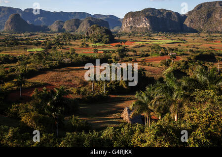 Tobacco growing area, view of the Vinales Valley, in the background karst cones called mogotes, sunset light, near - Stock Photo