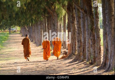 Buddhist monk travel pine forest in Thailand - Stock Photo