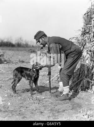 1930s MAN HUNTER WITH SHOTGUN IN CORN FIELD TAKING BIRD FROM IRISH SETTER DOG - Stock Photo