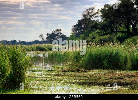Linyanti River; Botswana - Stock Photo