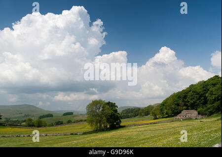 Farmland in upper Wensleydale near Hawes in early summer, with wildflower meadows in flower. North Yorkshire, UK - Stock Photo