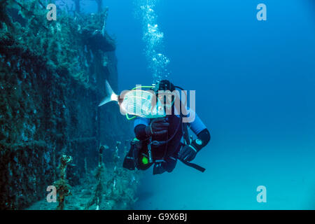 Scuba diver near the deck of a sunken patrol boat with a Bream in the fore ground. - Stock Photo