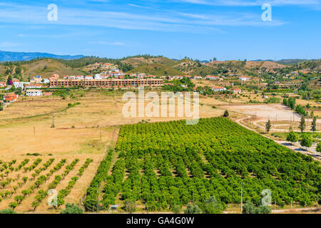 A view of field of olive trees in countryside landscape near Silves town, Algarve region, Portugal - Stock Photo
