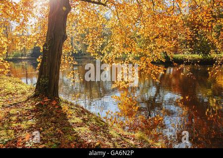 The park at the Castle de Haar in autumn - Stock Photo