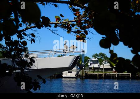 Two pelicans resting on a boat at the docks in a Greek Community in Tarpon Springs, Florida. - Stock Photo