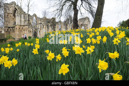 Buildings and Landmarks - St Mary's Abbey - York - Stock Photo