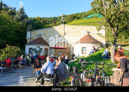 Dresden wine-growing estate Klaus Zimmerling and vineyards Germany Sachsen, Saxony - Stock Photo
