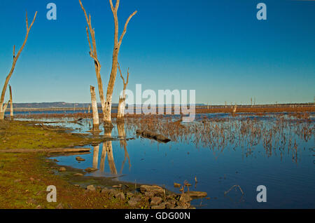 Vast calm blue waters of Lake Nuga Nuga with dead trees reflected in mirror surface under blue sky in outback Qld - Stock Photo
