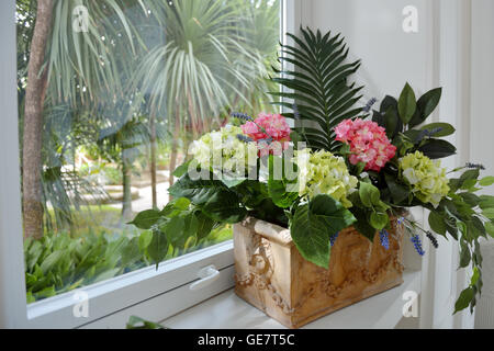 House plant hydrangea and green leaves in a ceramic pot on the windowsill - Stock Photo