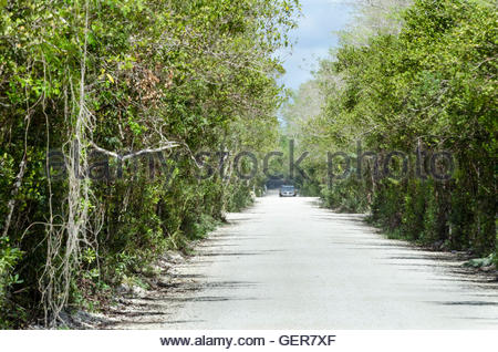 Car approaching in heat shimmer and dust on dirt road through the Everglades - Stock Photo