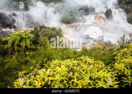 Sinter terraces at Orakei Korako (Hidden Valley) geothermal area, Taupo Volcanic Zone, North Island, New Zealand - Stock Photo
