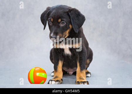 Sad little puppy waiting for someone to play with - Stock Photo