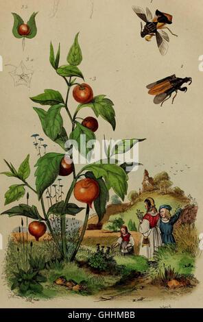 Dictionnaire pittoresque d'histoire naturelle et des phénomènes de la nature (1838) - Stock Photo