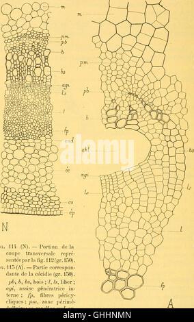 Bulletin biologique de la France et de la Belgique (1904) - Stock Photo