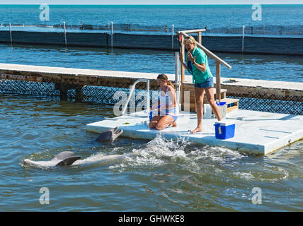 Florida Keys, Grassy Key, Dolphin Research Center, dolphin trainers - Stock Photo