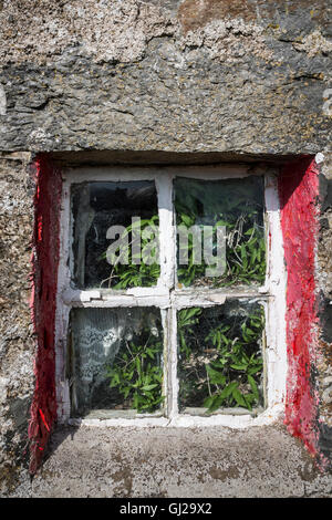 Window in Croft ruin in the Cabrach. - Stock Photo