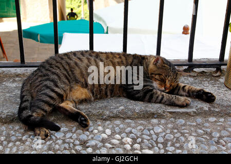 Sleeping cat in the street - Stock Photo