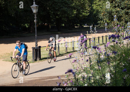 London, UK. 12th Aug, 2016. Cyclists commuting to work through Hyde Park in London Credit:  Roger Garfield/Alamy - Stock Photo