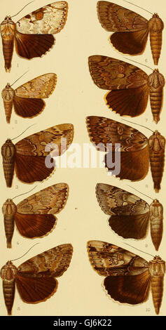 Catalogue of the Lepidoptera Phalænæ in the British museum (1913) - Stock Photo