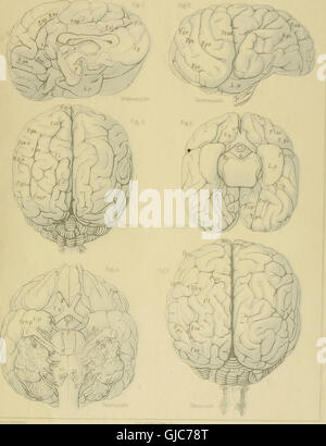 Denkschriften der Medicinisch-Naturwissenschaftlichen Gesellschaft zu Jena (1889) - Stock Photo