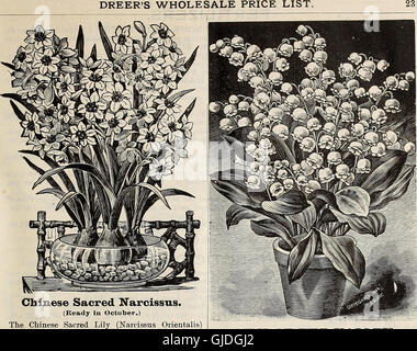 Dreer's quarterly wholesale price list of seeds, plants, bulbs, &c. - summer edition July 1895 August (1895) - Stock Photo