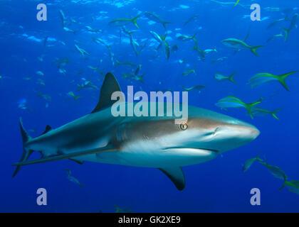 fish underwater reef - Stock Photo