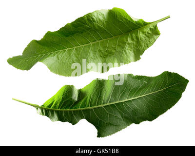 Two separate horseradish leaves. Clipping paths, infinite depth of field. Design elements - Stock Photo