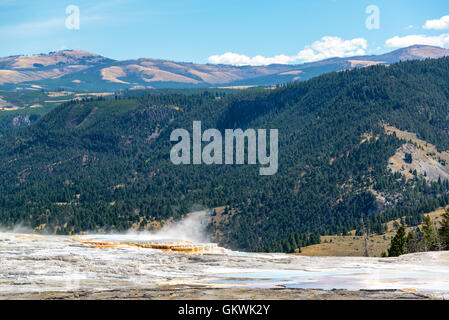 Steam rising from Mammoth Hot Springs with forest covered hills in the background in Yellowstone National Park - Stock Photo