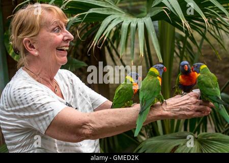 Woman feeding tame rainbow lorikeets / Swainson's Lorikeet - colourful parrots native to Australia - by hand in - Stock Photo